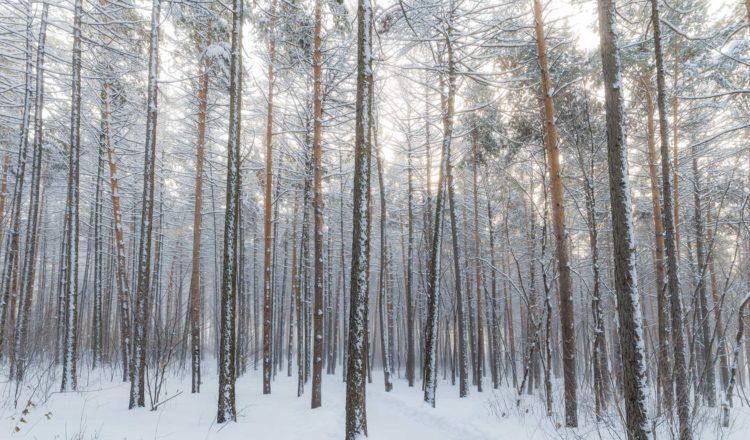 Passer un hiver en pleine forme